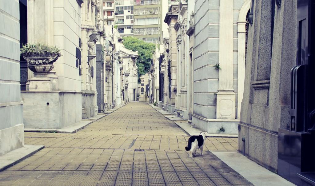 Cat in Recoleta cemetery