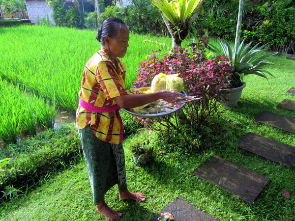 Balinese woman with offerings in the rice fields