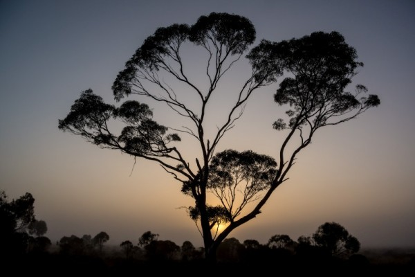 misty-nullarbor-southaustralia (Custom)
