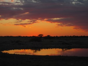 Etosha National Park's Watering Hole