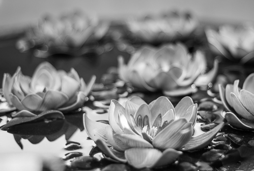 A day trip to see the temples of Lamphun. A large planter pot with brightly colored lotus flowers also looked beautiful in black and white.